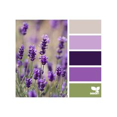 Design Seeds for all who color ❤ liked on Polyvore featuring colors, backgrounds, design seeds, flowers and color palettes