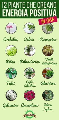 Queste 12 Piante sono l'ideale per creare pace ed energia positiva nella tua casa Hippie Life, Green Garden, Green Life, Growing Vegetables, Feng Shui, The Cure, Sweet Home, Herbs, House Styles