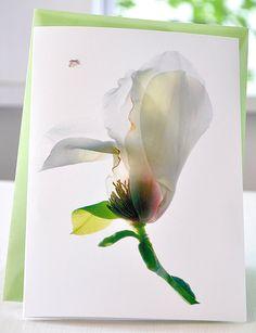 Handmade Greeting Card Woodhall Magnolia Size by Julia McLemore at GreenInkGallery  https://www.etsy.com/listing/97257342/handmade-greeting-card-woodhall-magnolia?ref=listing-shop-header-3