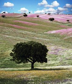 Alentejo, Portugal ~ just breathtaking!