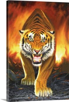 Chris Hiett Premium Thick-Wrap Canvas Wall Art Print entitled Tiger from the Embers, None
