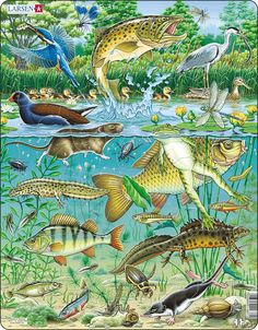 Made from thick board with a mix of large different shaped and easy to grip pieces. The nostalgic images make this puzzle ideal for men in mind with dementia. Underwater Drawing, Pond Drawing, Aquariums, Puzzles, Water Under The Bridge, Pisa, Nostalgic Images, Pond Life, Nature