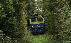 Gostyńska dżungla Train, Vehicles, Car, Automobile, Strollers, Autos, Cars, Vehicle, Tools