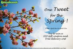 [Twitter Contest]  In one Tweet, what is Spring for you ? From April 8th to April 22th, try to win a $20 gift coupon & free delivery for your next order. Just try to represent Spring, in one Tweet (140 characters). In order to Participate, follow @Rarexoticseeds Twitter account and mention @Rarexoticseeds and #RESSPRING in your Tweet & retweet our Tweet. The best tweet will win !  Twitter account : twitter.com/Rarexoticseeds