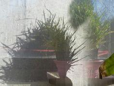 Molokai Girl: Cat Grass