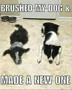 Probably the best of these memes we've seen! That had to take some time! #dogs #doglovers #funny