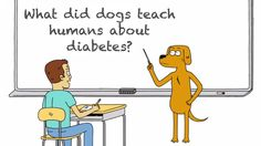 A TED-Ed Animation Explaining How Studying Domesticated Dogs Helped Treat Diabetes