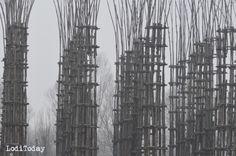 La Cattedrale Vegetale Lodi di Giuliano Mauri