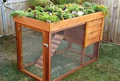 Mobile chicken tractor and veggie patch.