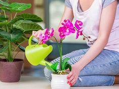 Vonné svíčky či bytové parfémy sice dokážou v domácnost navodit úžasnou atmosféru, ale některé chemikálie, jež řada z nich vypouští ...