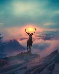 majestic animals animal portraits beautiful sunset amazing sunsets colorful sunset animals beautiful 20 cool photography ideas of this year Amazing Sunsets, Beautiful Sunset, Amazing Nature, Amazing Art, Beautiful Places, Amazing Pics, Beautiful Gifts, Wonderful Places, Wildlife Photography