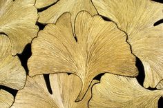Detail the top the console with leaves in iron the ginkgo Biloba. Engraved and gilded with gold leaf.