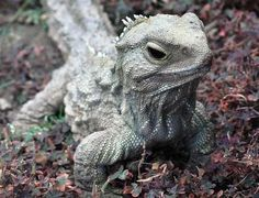 Animales longevos - Con 115 años, Henry es conocido por ser el miembro más viejo de esta especie que habita las islas de Nueva Zelanda. Este reptil no solo es la estrella indiscutida del Museo Southland en Invercargill, sino que también es un orgulloso padre que tuvo sus primeras crías a los 111 años.