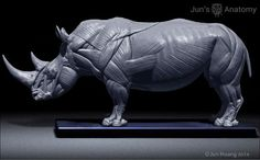 Rhino Anatomy model at 1/16th scale - flesh & superficial muscle – Jun's anatomy: