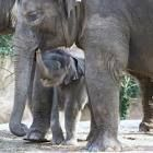 Zoo Animals Engangered Animals