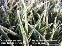 Wat geef je voeding? Meer op: www.facebook.nl/hooggevoeligheelgewoon en www.hooggevoeligheelgewoon.nl