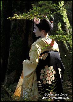 Geisha apprentice, Maiko, under maple tree, Kyoto, Japan  Photo Ref. No: geisha-p-020