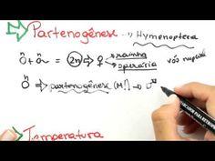 Me Salva! GEN19 - Determinação sexual por partenogênese e temperatura - YouTube