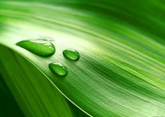 Water Drops On Fresh Green Leaf | Free Photography | All Free Web Resources for Designer - Web Design Hot!