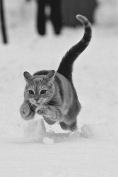 Salta está muy frío