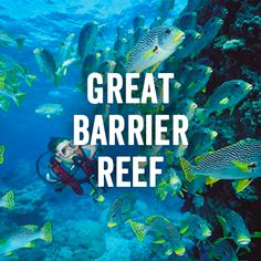 Snorkel the Great Barrier Reef.
