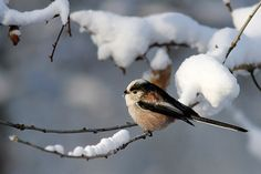 I am not immune to the charms of birds in the snow