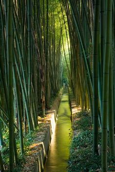 Water running through a garden of bamboo. Clive Nichols Photography