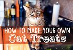 Buying cat treats these days can be scary. It seems every time you turn around, there's a new recall! Not to mention, it can be hard to know what's really in them or where the ingredients are sourced from....