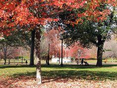 fall foliag Boston Ma 2013   Fall Foliage Cruises in the U.S. and Canada
