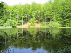 Rude skov
