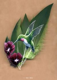 Sond BirdsPainted Feathers -