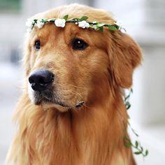Rufio-palooza & the best 'Dog Love Song' > https://www.youtube.com/watch?v=Rm1th-Yzuq4