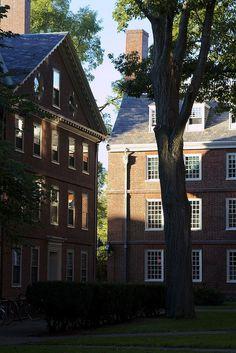 Harvard Yard - DiscoverHarvard.com