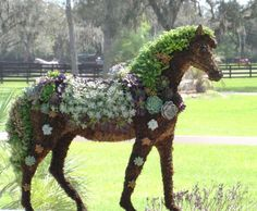 Succulent Horse Topiary Centerpiece Perfect Gift  Home Garden or Event Decor.