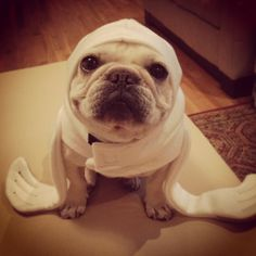 Are you ready for Halloween? French Bulldog in a seal costume, check!