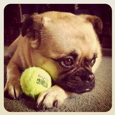 Boo boo loves her ball
