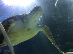 Freizeit-Tipp: Nektons - Sea Life in Action