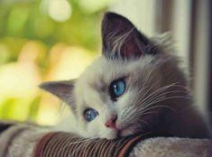 gatos-tristes-7.jpg (634×469)