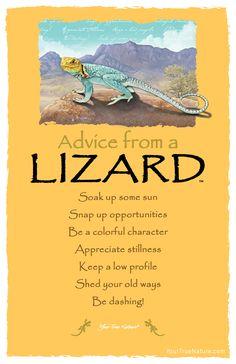 Spirit animal totem advice from a lizard. Advice Quotes, Life Advice, Good Advice, Life Quotes, Spiritual Animal, Animal Spirit Guides, Animal Medicine, Animal Symbolism, Power Animal