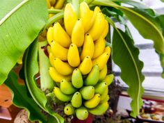 good reasons why you should be eating more bananas -Obiaks Blog