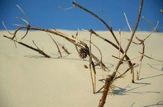In den Dünen vom Vejers Strand