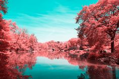 INFRARED NYC_I decided to capture with poetry a surprising collection of pictures of Central Park's landscapes, in a series named Infrared NYC. Using a infrared filter which reverses the real colors to transform them into red, pink, my aim is to show t…