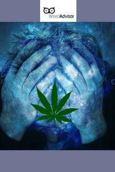 In the is the most common condition for which is taken. Studies show the drug is especially effective against pain, a type of pain involving is less habit-forming than opiate drugs and carries virtually no risk of fatal overdose. Neuropathic Pain, Packaging Supplies, North York, Buy Weed Online, Medical Cannabis, Ganja, Over Dose, Hemp, Drugs