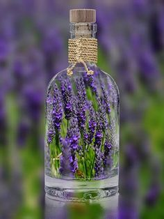 Lavender essential oil is one of the most used oils in aromatherapy. Lavender is also used in other various forms - perfume, lotion, soap, floral water. Lavender Cottage, Lavender Scent, Lavender Blue, Lavender Fields, Lavender Flowers, Lavender Extract, Purple Roses, Growing Lavender, Growing Herbs