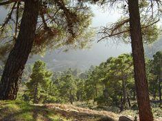 Sierra de Grazalema © Robert Bovington http://bobbovington.blogspot.com.es/2015/08/white-towns-of-andalusia-pueblos.html