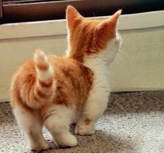 quit staring at my butt!