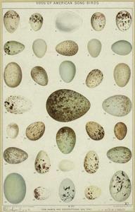 Eggs of American song-birds.