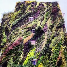 Vertical garden. Rue Des Forges. Paris.