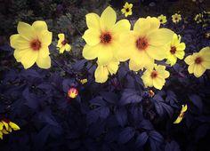 Fantastiske blomster på brygga i Tønsberg
