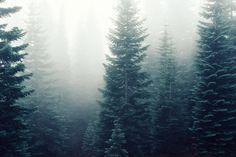 forest desktop wallpaper hd wallpapers